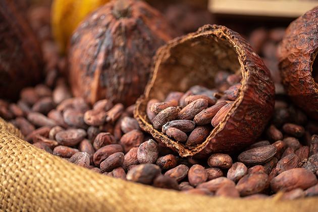 Какой горький шоколад самый лучший (вкусный) в России, мире – рейтинг марок
